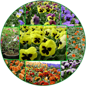 Førsteklasse blomster